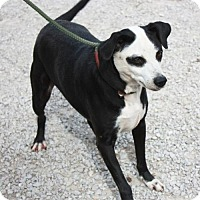 Adopt A Pet :: Panda - Cottageville, WV