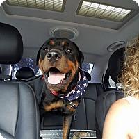 Adopt A Pet :: Kobe - New Smyrna Beach, FL