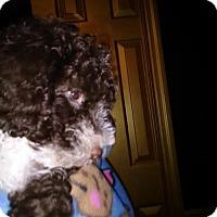 Adopt A Pet :: Coulson Orlando - Venice, FL