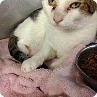 Adopt A Pet :: Leo - Voorhees, NJ