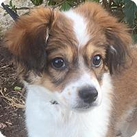 Adopt A Pet :: Linus - Oswego, IL