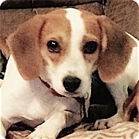 Adopt A Pet :: Mallory - Houston, TX