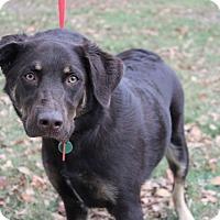 Adopt A Pet :: Mojo - Conway, AR