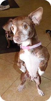 Chihuahua Mix Dog for adoption in San Diego, California - RaeAnn