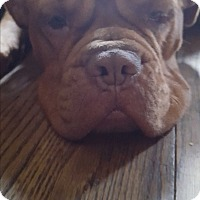 Adopt A Pet :: Alice - Cleveland, OH