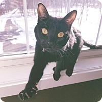 Adopt A Pet :: CiCi C160372 - Edina, MN