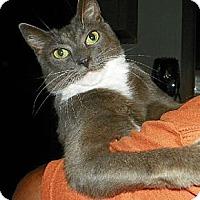 Adopt A Pet :: Dorian - Columbia, SC