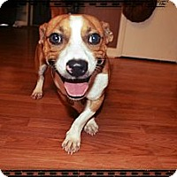 Adopt A Pet :: Nate - Marietta, GA
