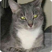 Adopt A Pet :: Spunky - Plainville, MA