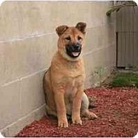 Adopt A Pet :: Boris - Marysville, CA