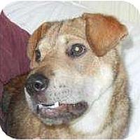 Adopt A Pet :: Frank - Antioch, IL