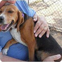 Adopt A Pet :: Julep - Phoenix, AZ