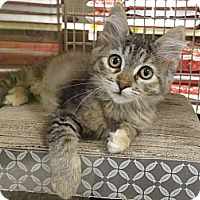 Adopt A Pet :: CELINA - Diamond Bar, CA