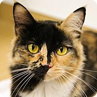 Adopt A Pet :: Malibu - Mission Viejo, CA