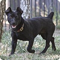 Adopt A Pet :: Bif - Winters, CA