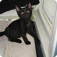 Adopt A Pet :: Cinderella - Seminole, FL