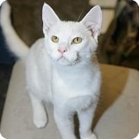 Adopt A Pet :: Fletcher - Capshaw, AL