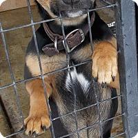 Adopt A Pet :: Sleet - Lewisburg, TN