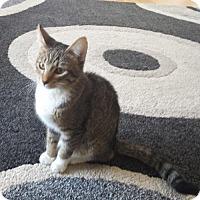 Adopt A Pet :: Max - Littleton, CO