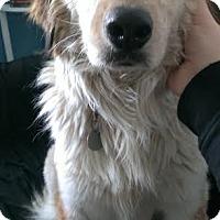 Adopt A Pet :: Moxxi - Columbus, OH