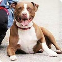 Adopt A Pet :: Sadie~Courtesy Listing - Davenport, IA
