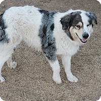 Adopt A Pet :: Lizzie  *Adopted - Tulsa, OK