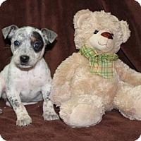 Adopt A Pet :: Hazel - Salem, NH
