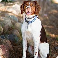 Adopt A Pet :: AZ/Snickers - Glendale, AZ