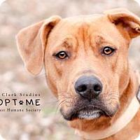 Adopt A Pet :: Aunna - Edwardsville, IL