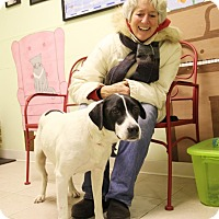 Adopt A Pet :: Zoey - Elyria, OH
