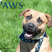 Adopt A Pet :: Paws - Hamilton, MT