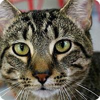 Adopt A Pet :: Beck - Martinsville, IN