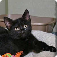Adopt A Pet :: Rorie - Shippenville, PA