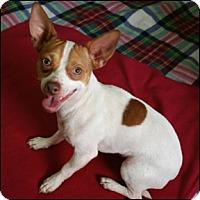 Adopt A Pet :: Martez - Shreveport, LA