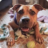Adopt A Pet :: Kiarra - Brooklyn, NY