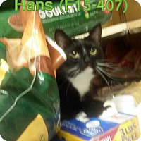 Adopt A Pet :: Hans - Tiffin, OH