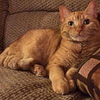 Adopt A Pet :: Fabulous Fae - New York, NY