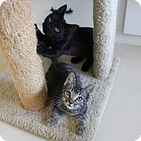 Adopt A Pet :: Fargo & Audi - videos - Studio City, CA