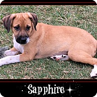 German Shepherd Dog/Shepherd (Unknown Type) Mix Puppy for adoption in Boerne, Texas - Sapphire