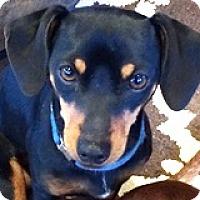 Adopt A Pet :: Garrison Glider - Houston, TX