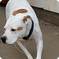 Adopt A Pet :: Chloe-PENDING ADOPTION - Sioux Falls, SD