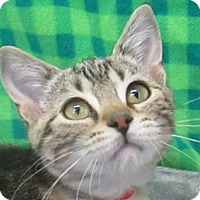 Adopt A Pet :: Flurry - Lloydminster, AB