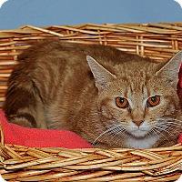 Adopt A Pet :: Floyd - Gatineau, QC
