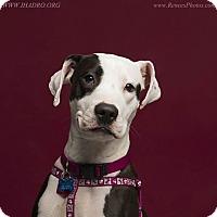 Adopt A Pet :: Mallory - Blacklick, OH