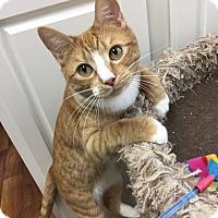 Adopt A Pet :: Shyla - Youngsville, NC