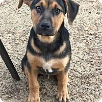 Adopt A Pet :: JACKSON AND OXFORD - Moosup, CT