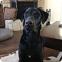 Adopt A Pet :: Rylee - Brattleboro, VT