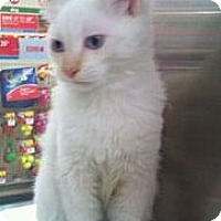 Adopt A Pet :: Gianni - Modesto, CA