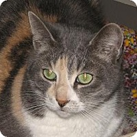 Adopt A Pet :: Mindy - Woodstock, IL