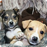Adopt A Pet :: Ola - Lancaster, OH